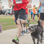 Greenville Animal Control Shelter to host  Bark in the Park 5k