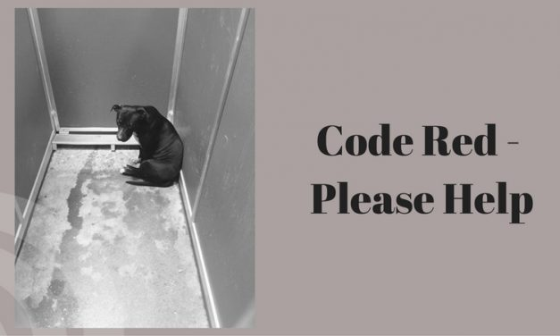 Code Red – Please help