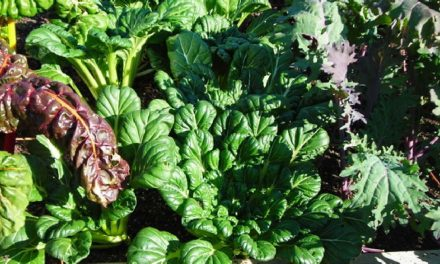 Fall Greens by Byron Chitwood, Hunt County Master Gardener