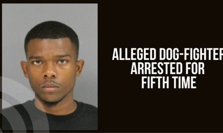 Male arrested for the fifth time for alleged dog fighting