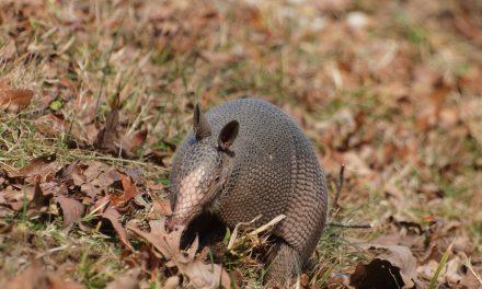 Wild animals in your yard || Hunt County Master Gardener