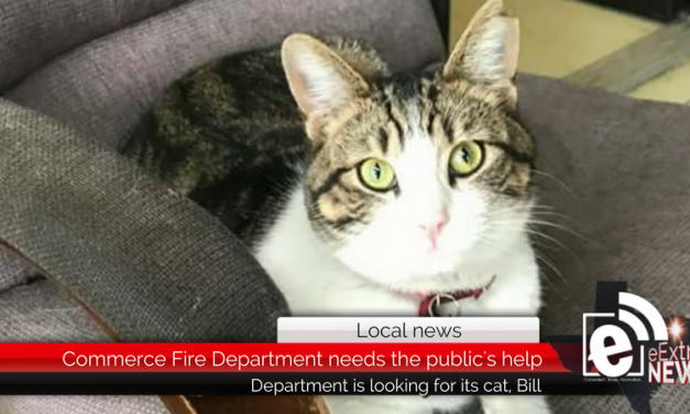 Commerce Fire Department needs the help of the public to find its cat