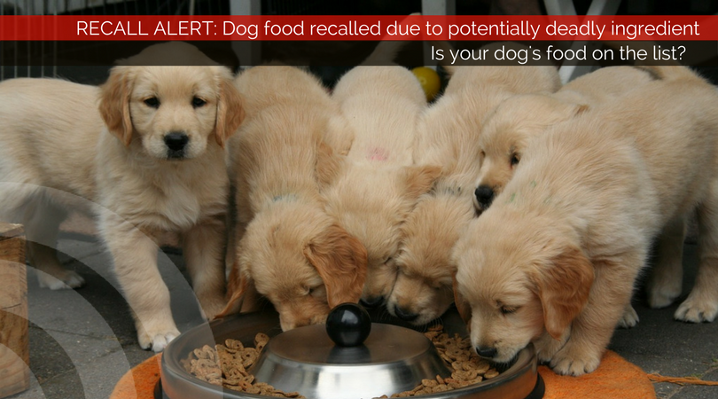 Deadly ingredient found in some recalled dog foods; Is your dog's food on the list?