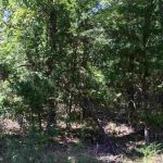 9.81 wooded acres in NE Lamar County