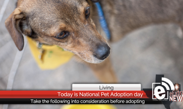 How to determine if owning a pet is for you – Today is National Pet Adoption Day